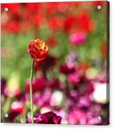 Standing Out Above The Crowd Acrylic Print