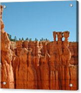 Standing Tall In Bryce Canyon Acrylic Print