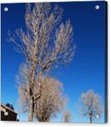 Standing Tree  Despite Acrylic Print