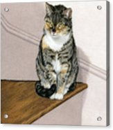 Stanzie Cat Acrylic Print