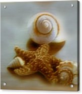 Star And Shells Acrylic Print