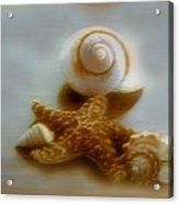 Star And Shells Acrylic Print
