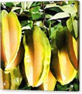 Star Apple Fruit On Tree Acrylic Print