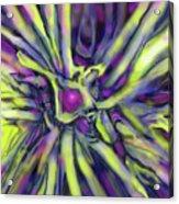 Star Burst Acrylic Print