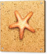 Star Fish Acrylic Print by Katherine Young-Beck