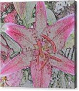 star Flower as Pencil Sketch Acrylic Print