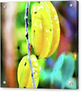 Star Fruit  Acrylic Print