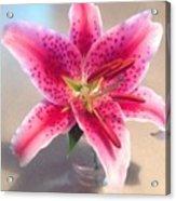 Star Gaze Lilly Acrylic Print