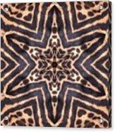 Star Of Cheetah Acrylic Print
