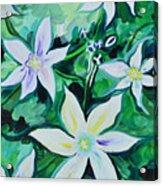 Star Of The Garden Acrylic Print