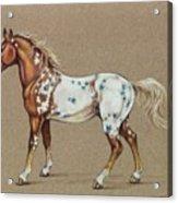 Star Spangled Horse Acrylic Print