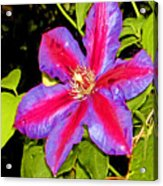 Star Treatment Acrylic Print