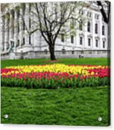 Star Tulips Acrylic Print