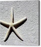 Starfish 2016 Acrylic Print