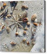 Starfish And Sea Shells Acrylic Print
