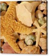 Starfish And Seashells Acrylic Print