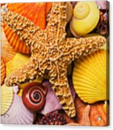 Starfish And Seashells  Acrylic Print