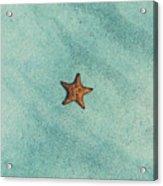 Starfish Aquamarine Acrylic Print