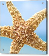 Starfish Close-up Acrylic Print