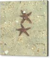 Starfish In Love Acrylic Print