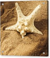 Starfish In Sand Acrylic Print