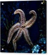 Starfish On Glass Acrylic Print