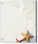 Starfish On Tropical Beach Acrylic Print by Mehmed Zelkovic