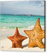 Starfish On Tropical Caribbean Beach Acrylic Print by Mehmed Zelkovic