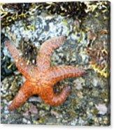 Starfish Running Acrylic Print