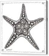 Starfish Acrylic Print by Stephanie Troxell