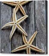 Starfishes In Wooden Acrylic Print