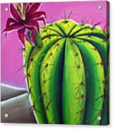 Stargazer Cactus Acrylic Print