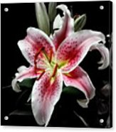 Stargazer On Black 11x14 Acrylic Print