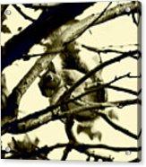 Staring Squirrel Acrylic Print
