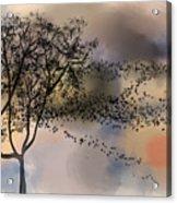 Starlings At Dusk Acrylic Print