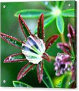 Starry Droplets Acrylic Print