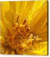 Starry Goldeneye Acrylic Print