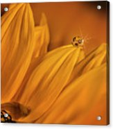 Starry Sunflower Acrylic Print