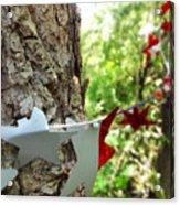 Stars Around Tree 1 Acrylic Print