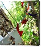 Stars Around Tree 2 Acrylic Print