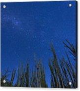 Stars Over Cactus Acrylic Print