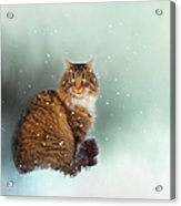 Starting To Snow Again Acrylic Print