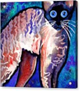Startled Cornish Rex Cat Acrylic Print by Svetlana Novikova