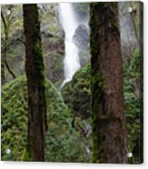 Starvation Creek Falls Between The Trees Acrylic Print