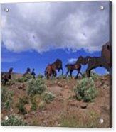 Steel Horses Acrylic Print