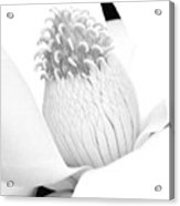 Steel Magnolia 47 - Bw - Water Paper Acrylic Print
