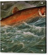 Steelhead Trout Fish No.143 Acrylic Print