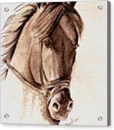 Steely Black Stallion Acrylic Print
