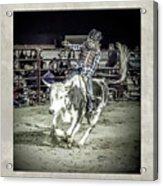 Steer Buck Out _c Acrylic Print