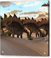 Stegosaurus Dinosaur Acrylic Print